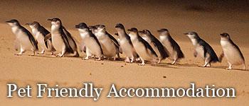 Phillip Island Pet Friendly Accommodation